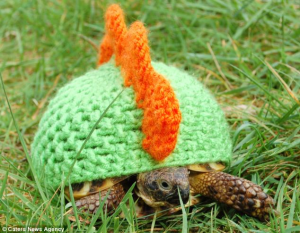 tortoise with cosy 2